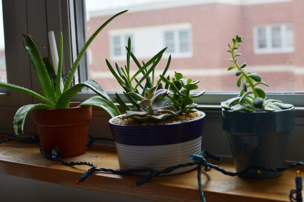 What You Need to Know Before Moving Into Your First Dorm Room: Bring the Outside In