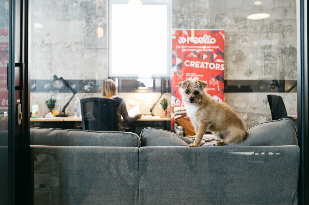 The Rise of Coworking - Some coworking spaces are pet-friendly like this WeWork location in Santa Monica, California.